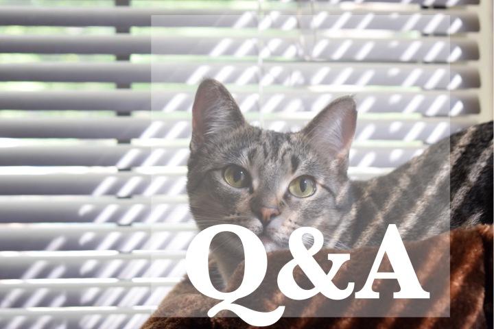 Q&A [6/1/17]